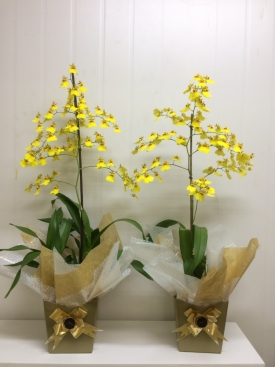 Módulo 1 - introdução a arte floral